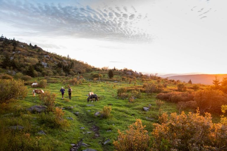 Grayson Highlands Hiking with Wild Ponies in Smyth County VA